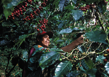 fair_trade_coffee_cherries_measuring_social_impact_social_innovation_review