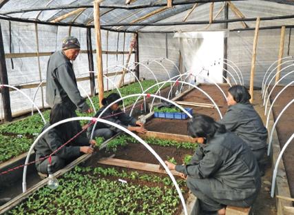 Moutain_Hazelnut_Venture_nursery_Bhutan