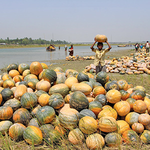 Advancing Water-Wise Food Production - Stanford Social Innovation Review