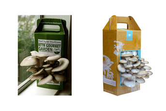 Before and after: Back to the Roots old packaging (left) has inconsistent fonts and messaging, and the confusing abbreviation BTTR; new packaging (right) stand outs on shelves and reflects the eco-friendly nature of the company. (Photo courtesy of Back to the Roots)