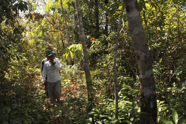 Donatus walking through the pilot project forest.