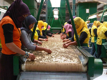 Quality control workers in the packing plant of a large Sumatran coffee co-op.