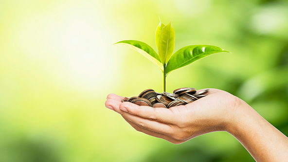 A hand holding coins and a seedling growing out of the coins