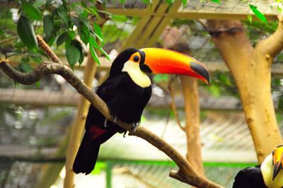 Toco_Toucan_biodiversity.jpg