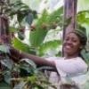 Faith in Fair Trade - Thumbnail