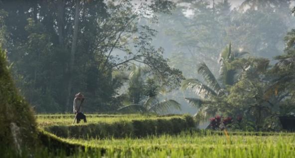 Subak farm in Bali, Indonesia